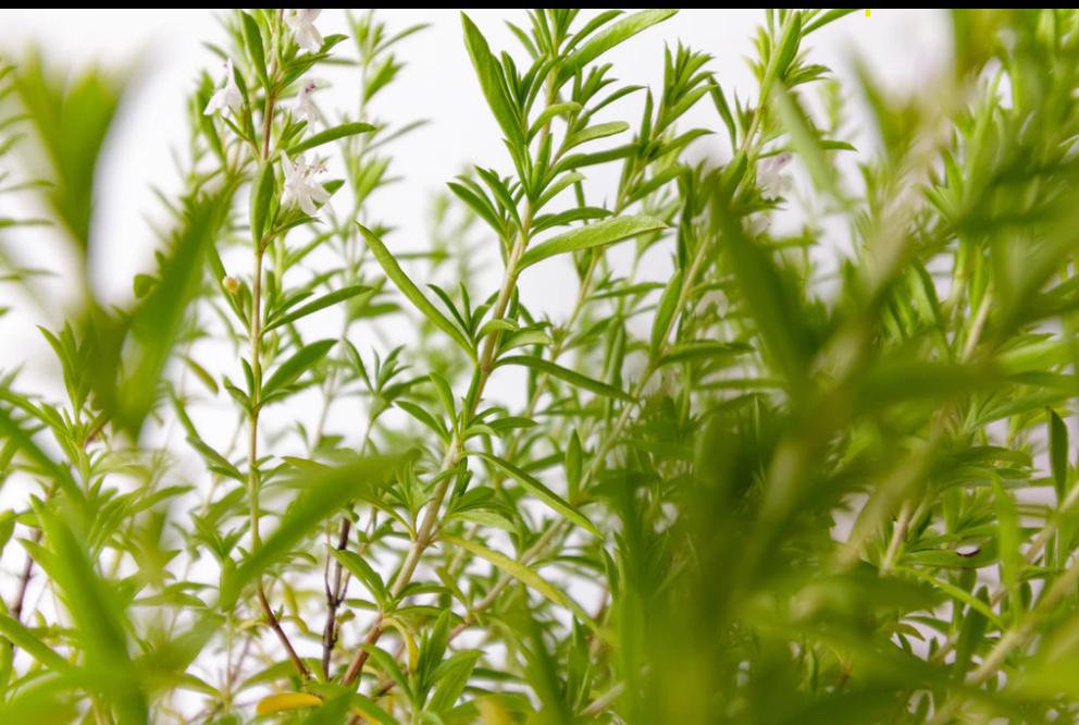 Herbalisme plantes médicinales huiles essentielles fleurs de Bach micronutrition